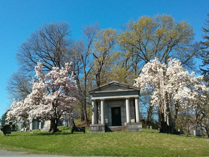 Mausoleum flanked by two magnificent magnolias in full bloom at Oakwood Cemetery---photo by Andrew Griffin.