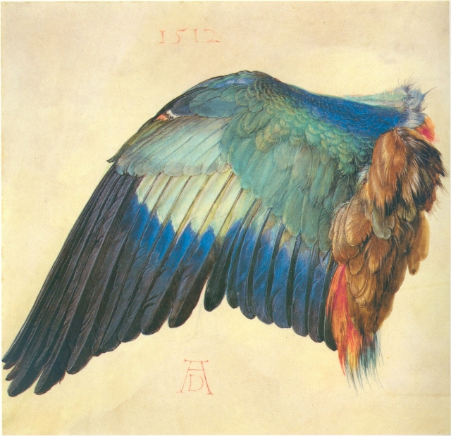 Wing of a Blue Roller---Albrecht Dürer, 1512.